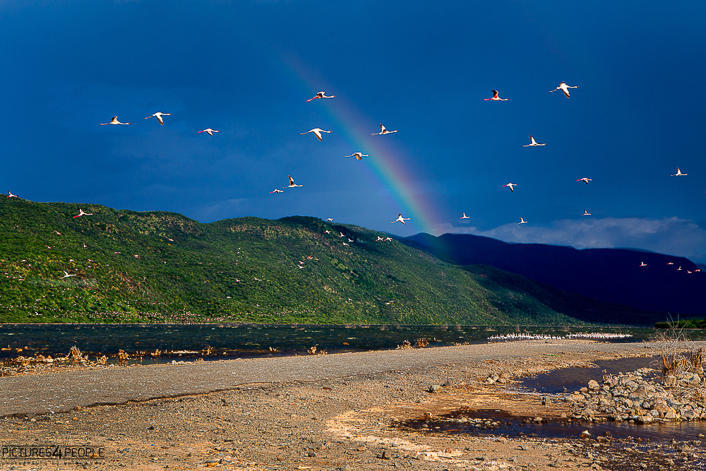 Regenbogen am Lake Bogoria