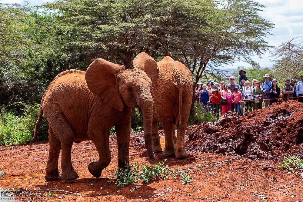Elefantenbabies im Waisenhaus in Nairobi