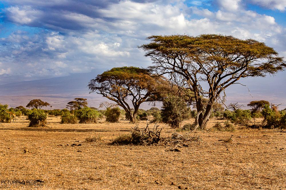 Landschaft im Amboseli