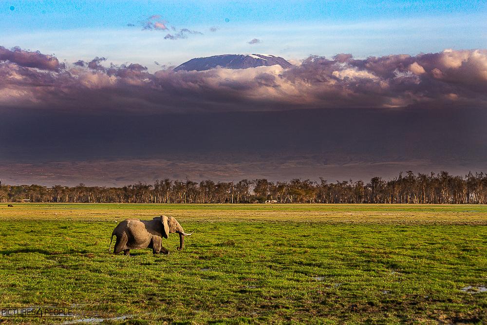 Elefant vor dem Kilimanjaro