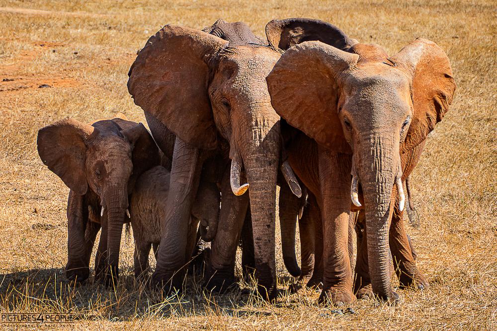 kleine Elefantengruppe